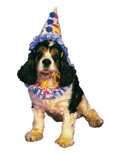Clown Kostüm für Hunde bunt. Aus der Kategorie Karnevalskostüme / Hundekostüme. Damit Ihr vierbeiniger Freund zum Karneval auch mit von der Partie sein kann, gibt es dieses süße Clown Hundekostüm. Mit diesem großartigen Hundeoutfit verwandelt sich Ihr Fiffi im Handumdrehen in einen lustigen Clown Hund. Wirklich goldig!