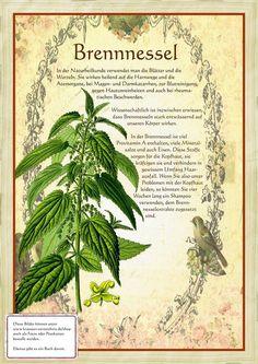 Brennnessel http://www.kraeuter-verzeichnis.de/