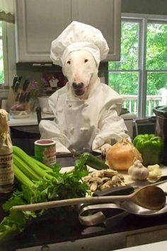 Cooking from Scratch Mini Bull Terriers, Miniature Bull Terrier, English Bull Terriers, Bull Terrier Dog, Animals And Pets, Funny Animals, Cute Animals, Best Dog Breeds, Best Dogs