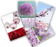4 cartes photo compositions photos de fleurs lilas, prunus, amour en cage et ail de jardin : Cartes par couleurs-nature-deco