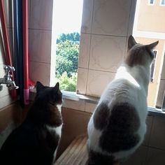 Thales e Estrelinha sempre juntos e olhando o mundo!