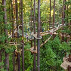 Mount Hermon Adventures exists to provide people of all backgrounds a quality, authentic and inspirational experience in the outdoors using challenge and adventure experiences. Tree House Designs, Play Houses, Places To Go, Beautiful Places, Scenery, Survival, Parks, Vacation, Landscape