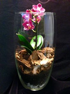 Mini purple orchard offered @Ma' Aubrey Signature terrariums. Priced at $65.00