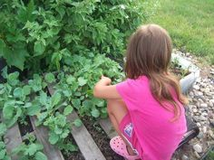 4 Year Old Girl's Vegetable Garden Must Go An industrious 4-year old girl in South Dakota has been forbidden from using a small, unused area outside her subsidized housing unit to grow green vegetables. The child and her severely disabled mother live on a fixed income disability payment of $628/month. The garden vegetables growing just outside her backdoor lovingly tended by the child provide a fresh and healthy addition to their diet that they could not otherwise easily afford.
