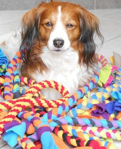 How to make your dog's new favorite toy: DIY Fleece Toys!  Note: need to figure…