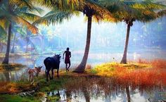 The beauty of Kerala cannot be explained by words. It can be shown through photos to prove you. Tourists like to visit beautiful places. I will explore tourist places in Kerala India. Landscape Photos, Landscape Photography, Nature Photography, Kerala Tourism, Le Village, Kerala India, South India, Tourist Places, Travel