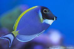 Série com peixes marinhos - Series with marine fishes - 18-02-2012 - IMG_4220