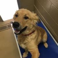 Port St Joe Fl Golden Retriever Meet Sandi A Pet For Adoption