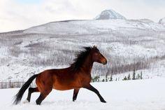'Wild Horse' ~Todd Klassy  Blackfeet Indian Reservation near Browning, Montana, USA