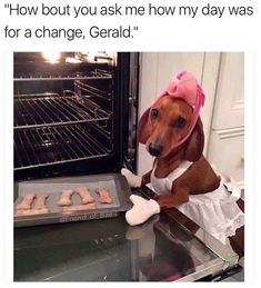 Funny Animal Pictures with Captions to Make You LOL - 29