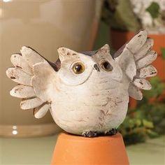 cute little owlie