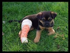 20 Puppies In Casts