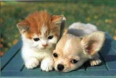 Happy Kitten Morning! Cute Puppies And Kittens Wallpaper  cute puppies and kittens   Free #Kindle #Books http://www.globalgrafxpress.com/goldmembersclub