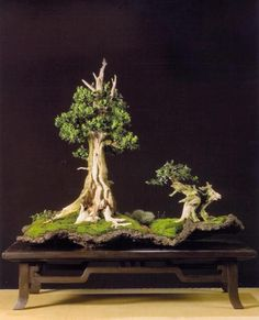Bonsai Landscape. I really love the look of Bonsai trees. Please check out my website thanks. www.photopix.co.nz