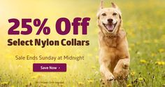Save 25% off of personalized nylon collars from dogIDs - Made in USA - Guaranteed for life!