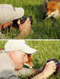Os belos cliques mostram fotos de animais que parecem desejar carreiras emocionantes de fotógrafos segurando uma câmera nas suas patinhas