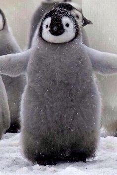 Penguin!!! My cute little waddle-y friend!