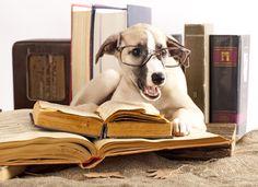 29 Smartest Dogs