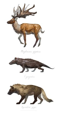 Reconstructions of some extinct mammals based on their skeletons just for funsies Jurassic Park, Jurassic World, Prehistoric Wildlife, Prehistoric World, Prehistoric Creatures, Creature Concept Art, Creature Design, Fantasy Creatures, Mythical Creatures