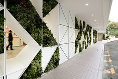 Green wall. Living wall.