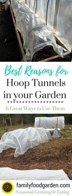 Why you Need Hoop Tunnels in your Garden