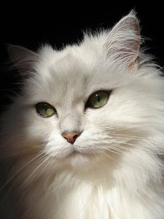 beautiful feline eyes
