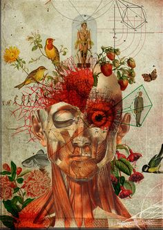 """asylum-art: """" Diego Max The art of Diego Max highlights the strong relationship between two aspects, art and anatomy. From his early years, Diego Max was enchanted by retro features of antique prints. Art And Illustration, Illustrations, Arte Inspo, Biology Art, Medical Art, Photocollage, A Level Art, Human Art, Human Drawing"""