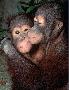 mamma e cucciolo di orango