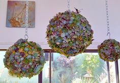Succulent Orb Forms  outdoor planters / I like this idea for a low maintenance plant indoors or out!