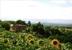 Beautiful sunflower fields near Chateau de Brametourte in Midi Pyrenees France