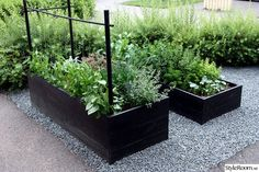 Garden boxes in gravel. Garden boxes in gravel. Potager Garden, Veg Garden, Vegetable Garden Design, Garden Boxes, Edible Garden, Raised Vegetable Gardens, Raised Planter, Dream Garden, Garden Projects