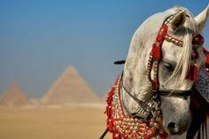 Giza, Egypt    Photograph by Romona Robbins