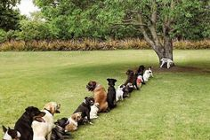 Dogs queuing for a pee