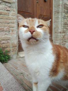 cat(ノ´・ω・)ノ