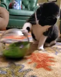 Cats love to hunt and this butterfly ball will keep them on the move. The ball creates satisfying play with its sensor-activated action that sets the butterfly fluttering when swatted. It's exercise for your feline friend and great entertainment for you! Cute Funny Animals, Cute Baby Animals, Animals And Pets, Cute Cats, Funny Cats, I Love Cats, Crazy Cats, Here Kitty Kitty, Cat Toys