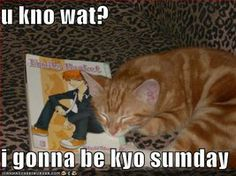 Yes you will.---> OMG THAT LOOKS EXACTLY LIKE MY ORANGE KITTEN WHOM I NAMED KYO!!!!!