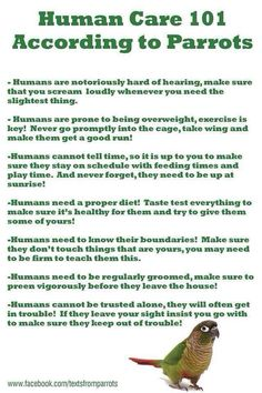 Human Care 101 According to Parrots