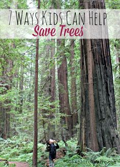 Trees provide us with oxygen and ensure that the Earth's temperature is livable. What can we do to return the favor? Here are a few simple ways kids can help save trees.