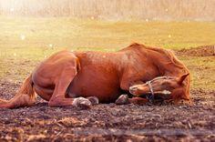 Sweet dreams, horsey