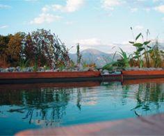 Baignade en piscine naturelle, un bassin écologique sans produit chimique Natural Swimming Pools, Patio, River, Places, Outdoor Decor, Summer, Biologique, Penne, Home