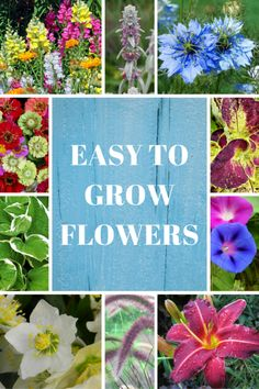 11 Easy to Grow Flow