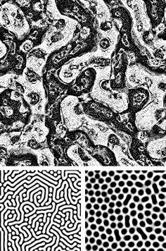 FIG. 7: En bas: deux résultats du modèle de réactiondiffusion de Turing évocateurs de structures de pigmentation des peaux de poissons ou de mammifères. En haut: résultat d'un modèle doté de règles plus complexes, inspiré de celui de Turing. Chaque pixel de ces images est une cellule de l'automate. Fiction, Pixel, Animal Print Rug, Images, Pisces, Stockings, Livres, Science Fiction