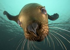 up close with a sea lion
