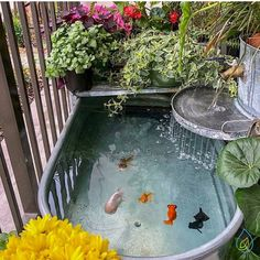 Aquarium Hobby: --- taking the pond game to a whole new level! Such a neat setup! - — taking the pond game to a whole new level! Such a neat setup! Small Water Gardens, Indoor Water Garden, Garden Plants, Indoor Pond, Fish Pond Gardens, Small Garden Ponds, Small Fish Pond, Fish Garden, Container Water Gardens