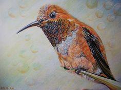 Uccello Colibrì disegno disegno matite colibrì bird di Stellangelo