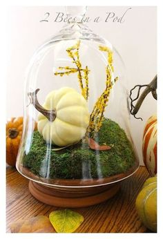 DIY autumn terrarium made with a faux pumpkin displayed in a cloche with a terra cotta base