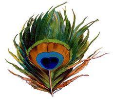hindi essay on peacock