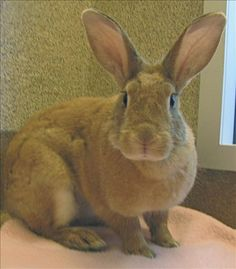 Ruby the rabbit is available for adoption today!