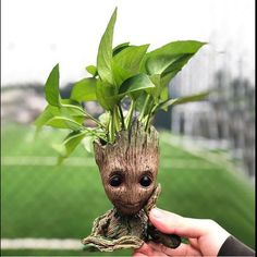 Will you fall in love with Baby Groot just like everyone else? Of course you will! And that's EXACTLY why we are offering 50% OFF our best selling product for a limited time only! Click the link in bio @house_plant_community Hurry, supplies are limited!