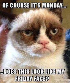 Oh grumpy cat... you crack me up!